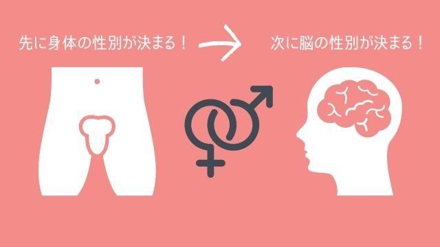 性分化のイラスト